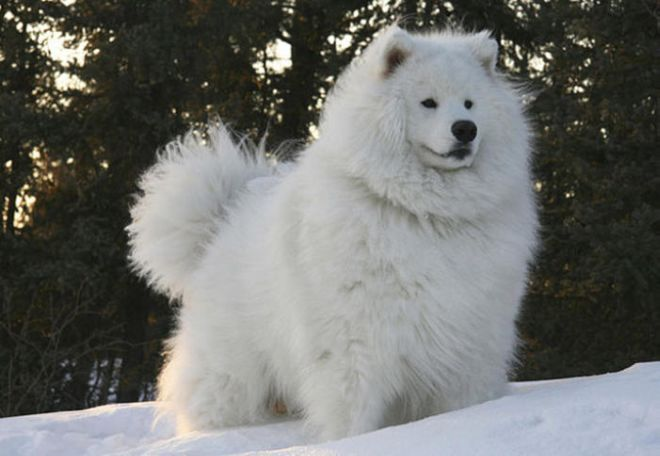 30 Cutest Fluffy Animals To Make You Smile